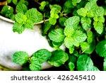 Mint In Pots