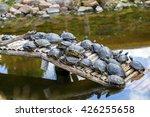 Turtles Having A Sunbath.