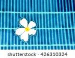 flower in pool in summer season ... | Shutterstock . vector #426310324