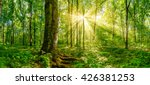 forest with golden sun rays | Shutterstock . vector #426381253