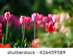 sunny flowers background.... | Shutterstock . vector #426459589