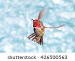 Male Annas Hummingbird In...