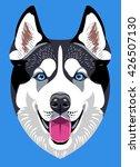 portrait of a husky dog breed | Shutterstock .eps vector #426507130