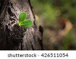 young plant growing on the tree ... | Shutterstock . vector #426511054