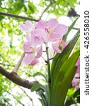 Small photo of Beautiful Vanda purple orchid in garden