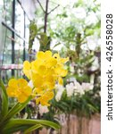Small photo of Beautiful Vanda yellow orchid in garden