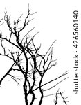 Branch Silhouette On A White...