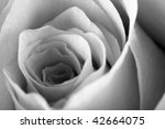 close up of rose some parts are ... | Shutterstock . vector #42664075