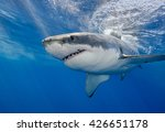 Small photo of Great white shark, carcharodon carcharias, underwater at Guadalupe Island Mexico.