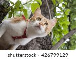 Stock photo cute white red cat in a red collar prepares to jump from tree cat while hunting 426799129