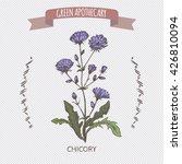 color cichorium intybus aka... | Shutterstock .eps vector #426810094