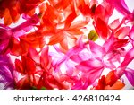 the stunning red flowers... | Shutterstock . vector #426810424