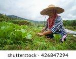 kundasang sabah malaysia   may...   Shutterstock . vector #426847294