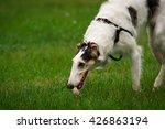 russian hound | Shutterstock . vector #426863194