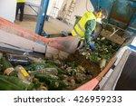worker is sorting the...   Shutterstock . vector #426959233