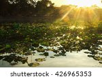 Lotus Pond With Sunset In...