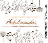 herbal cosmetics hand drawn... | Shutterstock .eps vector #426968836