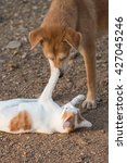 Stock photo cat and dog playing 427045246