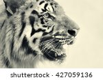 beautiful angry face of royal... | Shutterstock . vector #427059136