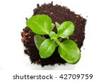 green plant from top view ...   Shutterstock . vector #42709759
