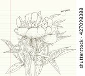 peony root flower sketches | Shutterstock .eps vector #427098388