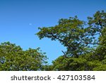Tree Tops Against Blue Sky Wit...
