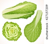 chinese cabbage isolated on... | Shutterstock .eps vector #427157209