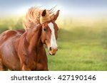 Stock photo beautiful red horse with long mane portrait in motion 427190146