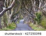 the dark hedges near ballymoney ... | Shutterstock . vector #427250398