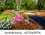 blooming flowers in keukenhof...   Shutterstock . vector #427265074