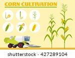 Infographics The Growing Corn....