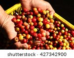 fresh coffee beans | Shutterstock . vector #427342900