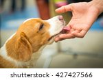 Stock photo hands touch the dog s head to show love 427427566