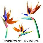 tropical floral set. strelitzia ... | Shutterstock . vector #427451098