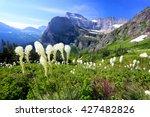 Bear Grass And Beautiful...