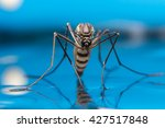 Mosquito On Blue Background...
