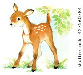 deer. watercolor animal... | Shutterstock . vector #427560784