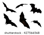 collection bat isolate on white ... | Shutterstock . vector #427566568
