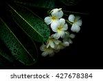 White Flowers  Flowers  Flower...