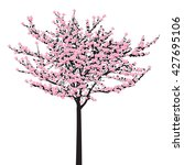 full bloom pink sakura tree ... | Shutterstock .eps vector #427695106