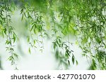 Green Willow Leaves