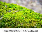 Thick Green Moss Settled On A...