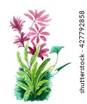 tropical leaves watercolor | Shutterstock . vector #427792858