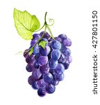 grapes watercolor | Shutterstock . vector #427801150