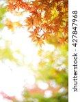 autumn tint | Shutterstock . vector #427847968