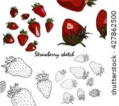 sketch strawberry | Shutterstock .eps vector #427862500