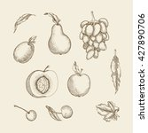 vector illustration. set of... | Shutterstock .eps vector #427890706