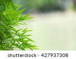 image view of green nature... | Shutterstock . vector #427937308