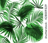 leaves of palm tree on white... | Shutterstock . vector #428009329