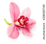 Orchid Flower Isolated On Whit...